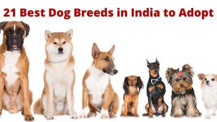 21 Best Dog Breeds in India