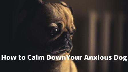 How to Calm Down Your Dog