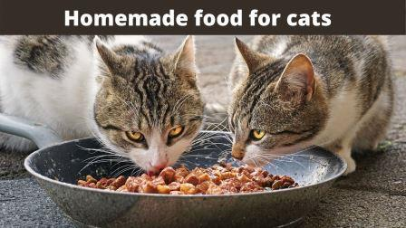 Homemade food for cats