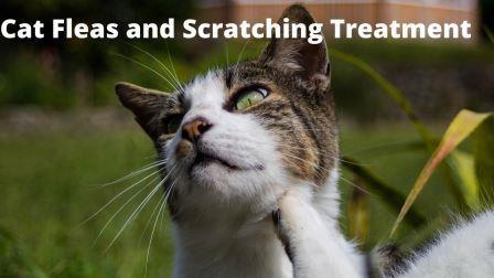 Cat flea treatment