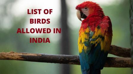 LIST OF BIRDS ALLOWED IN  INDIA