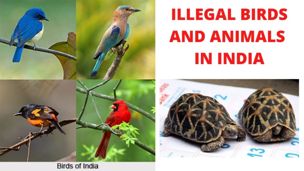 ILLEGAL BIRDS AND ANIMALS IN INDIA